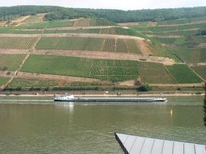 Rhine7